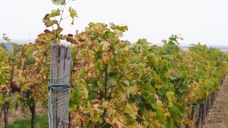 Vin biologique, quels sont les meilleurs crus ?